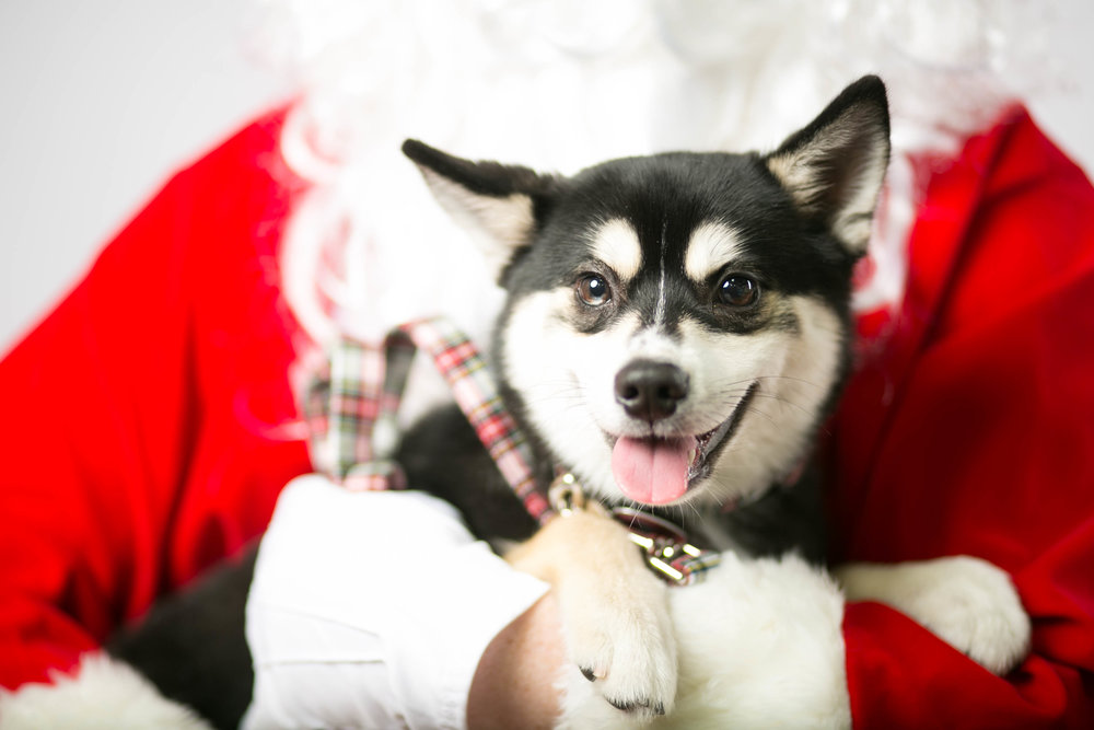 Philadelphia, PA, Puppy Christmas!201612180265.jpg