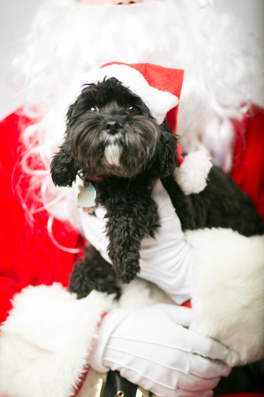 Philadelphia, PA, Puppy Christmas!201612180266.jpg