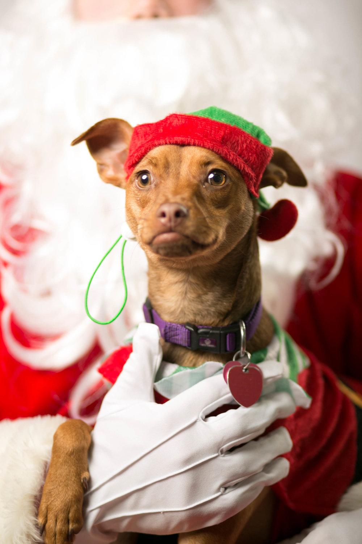 Philadelphia, PA, Puppy Christmas!201612180267.jpg