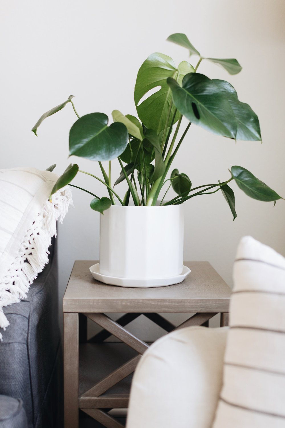 "Convivial  8"" Riveted Planter  paired with a Split Leaf Monstera"