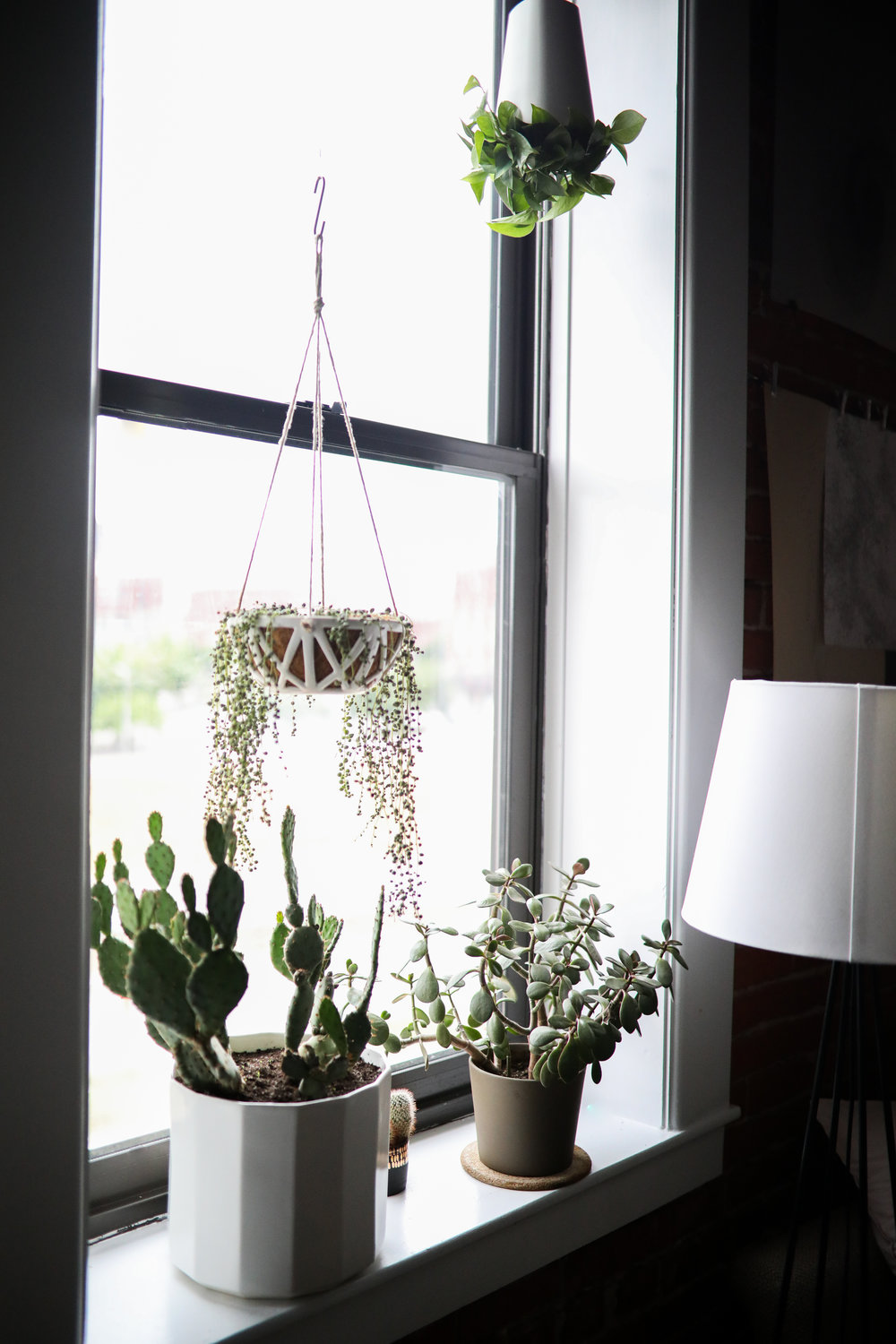 """CONVIVIAL -  XX Hanging Planter  w/ Cactus Plant +  10"""" Riveted Planter  w/ String of Pearls Plant"""