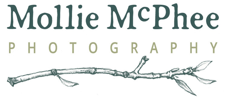 Mollie McPhee Photography | Brand Imagery for Small Businesses