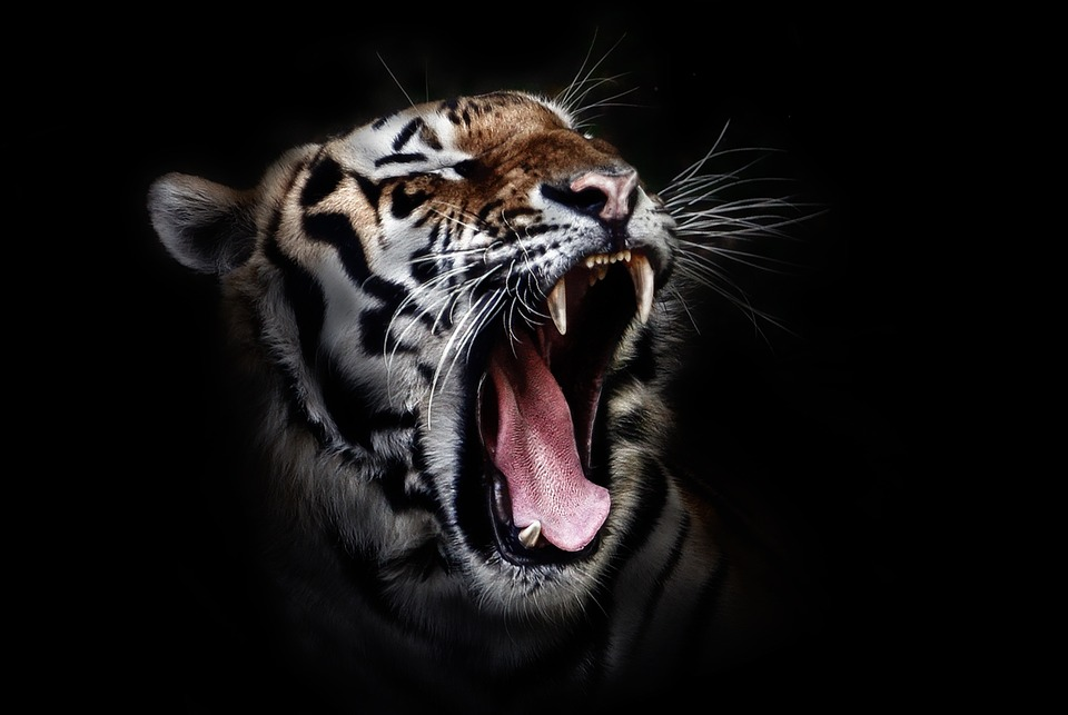 Tiger Art Wallpaper Jpg 960 800: The Beast Within And Parkinson's Disease
