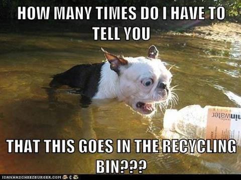 Image source:https://i.pinimg.com/736x/22/69/54/226954871cf5bfd3aa6167b25875b5cb--recycling-bins-funny-animal-pics.jpg