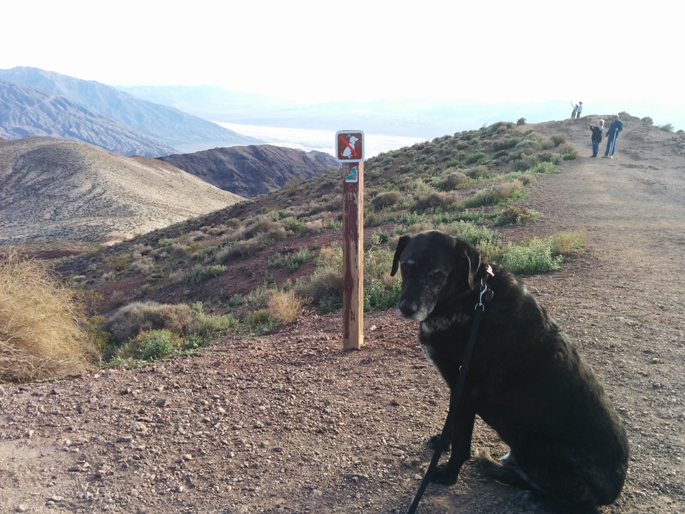 buddy on trail.jpg