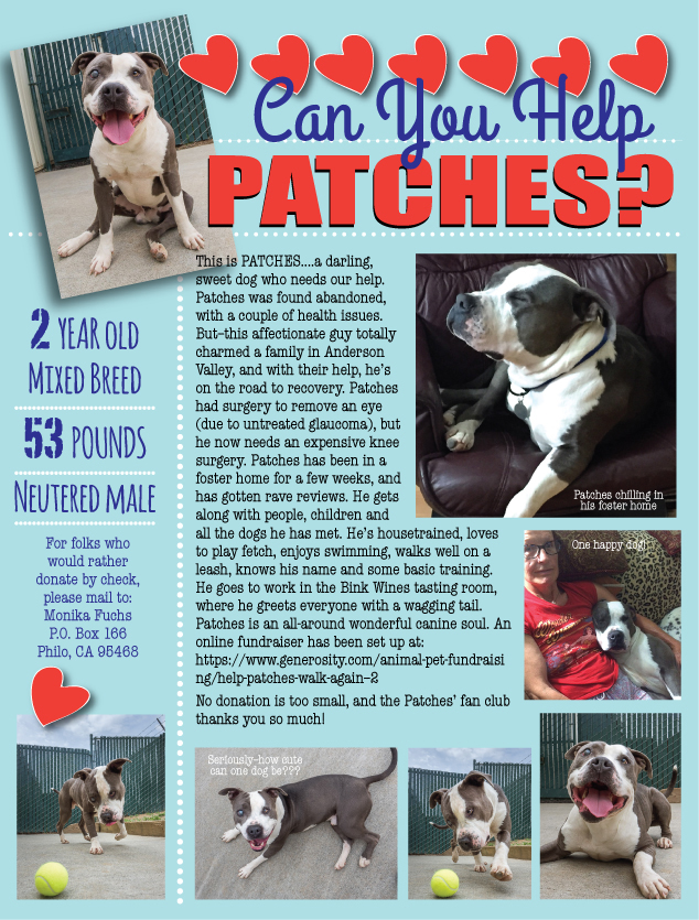 Patches-fundraiser.jpg