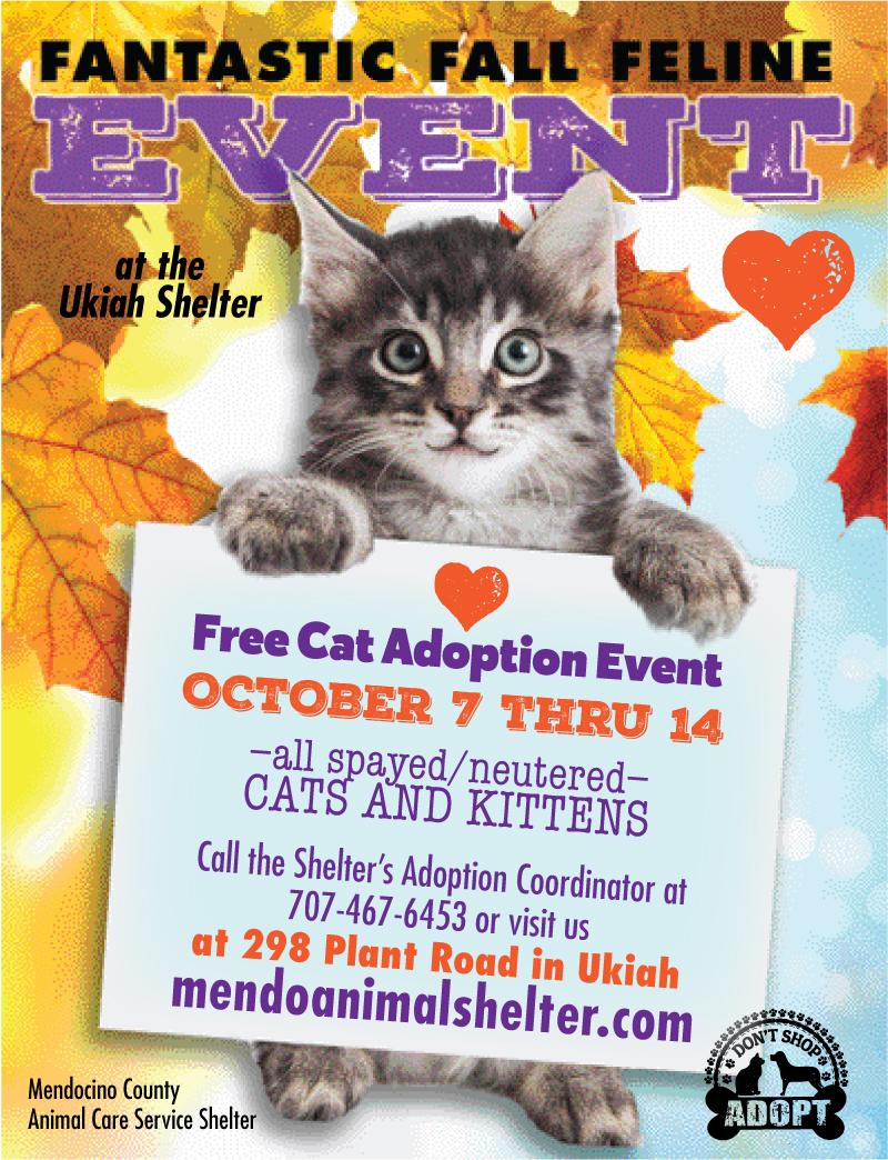 Free-cat-event2-fall-2017.jpg