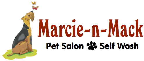 Marcie n mack boises best pet salon and self wash 208 891 9133 solutioingenieria Images