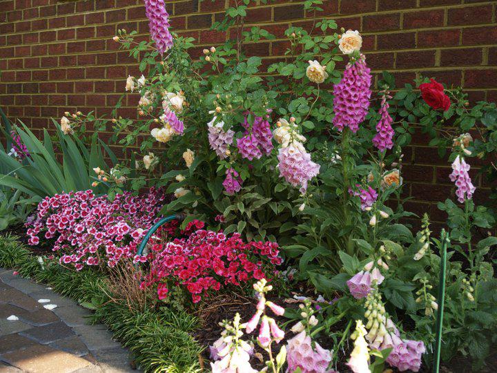 Garden-7.jpg