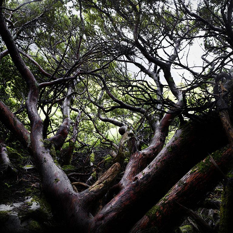 Aoraki Mount Cook_wood_02.2.jpg