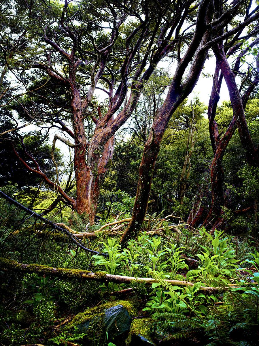 Aoraki Mount Cook_wood_01.jpg