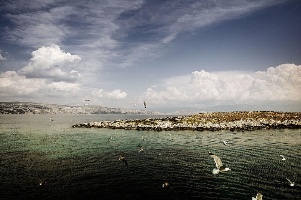 Krk_Seagull_Island.jpg