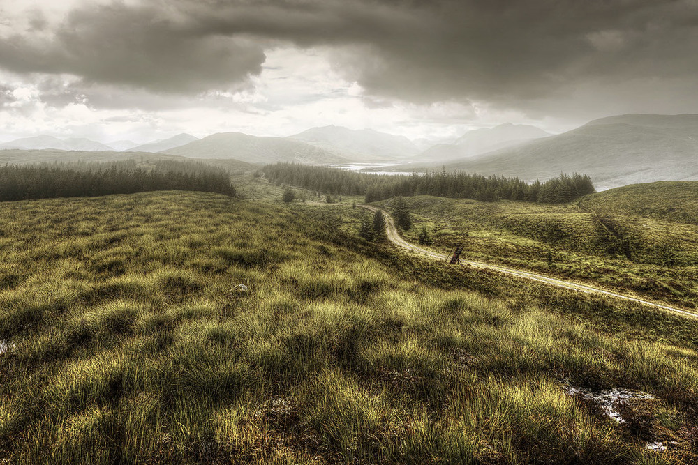 Scotland_field.jpg