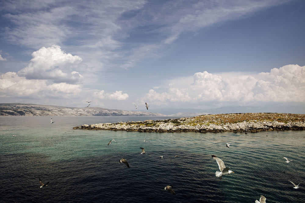 Krk_Seagull_Island_144.jpg