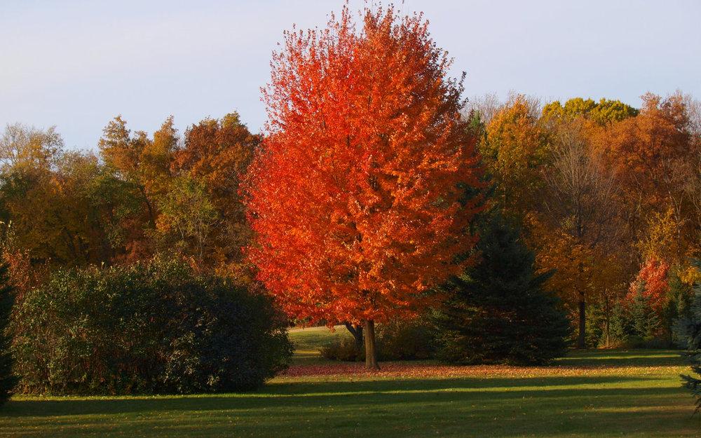 Autumn-Blaze-Knechts.jpg