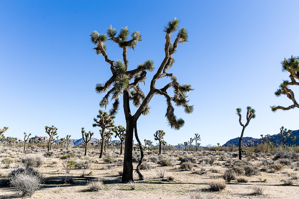 Joshua Tree National Park, California © Kat Molesworth (1).jpg