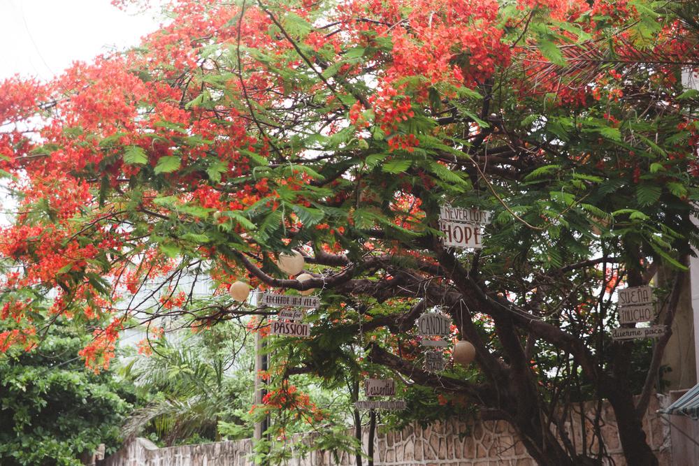Cancun Travel Photography - DiBlasio Photography-1.jpg