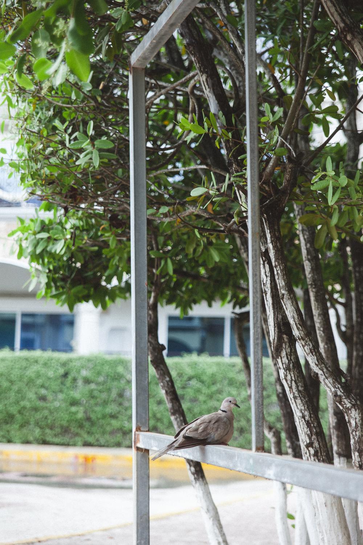 Cancun Travel Photography - DiBlasio Photography-13.jpg