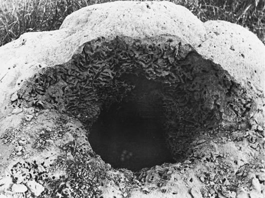 extinct nest 1.png