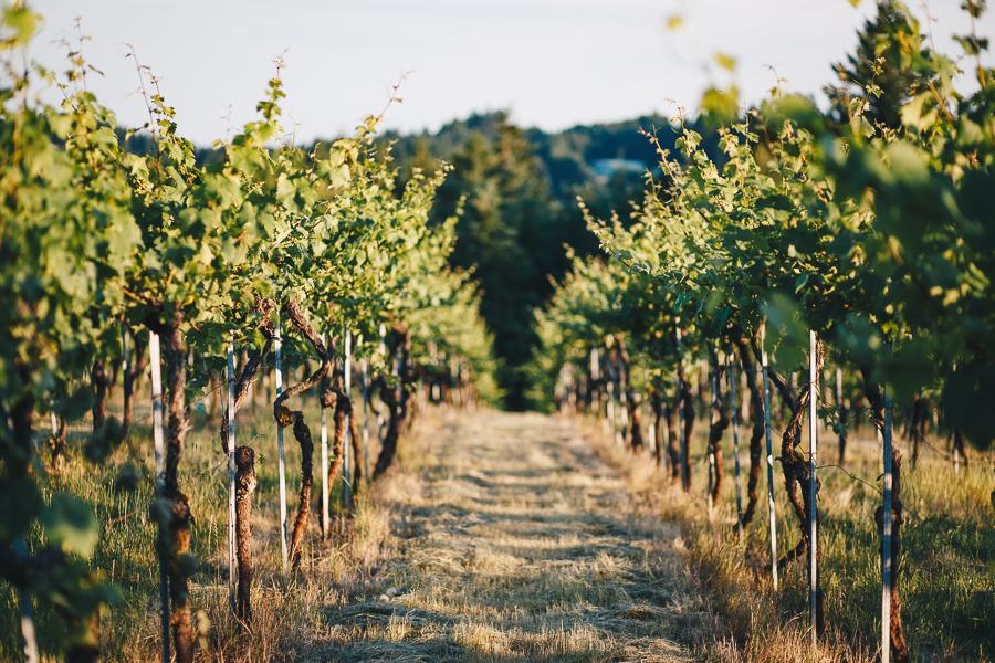beckenridge-vineyard-oregon-wedding-highlights-14.jpg