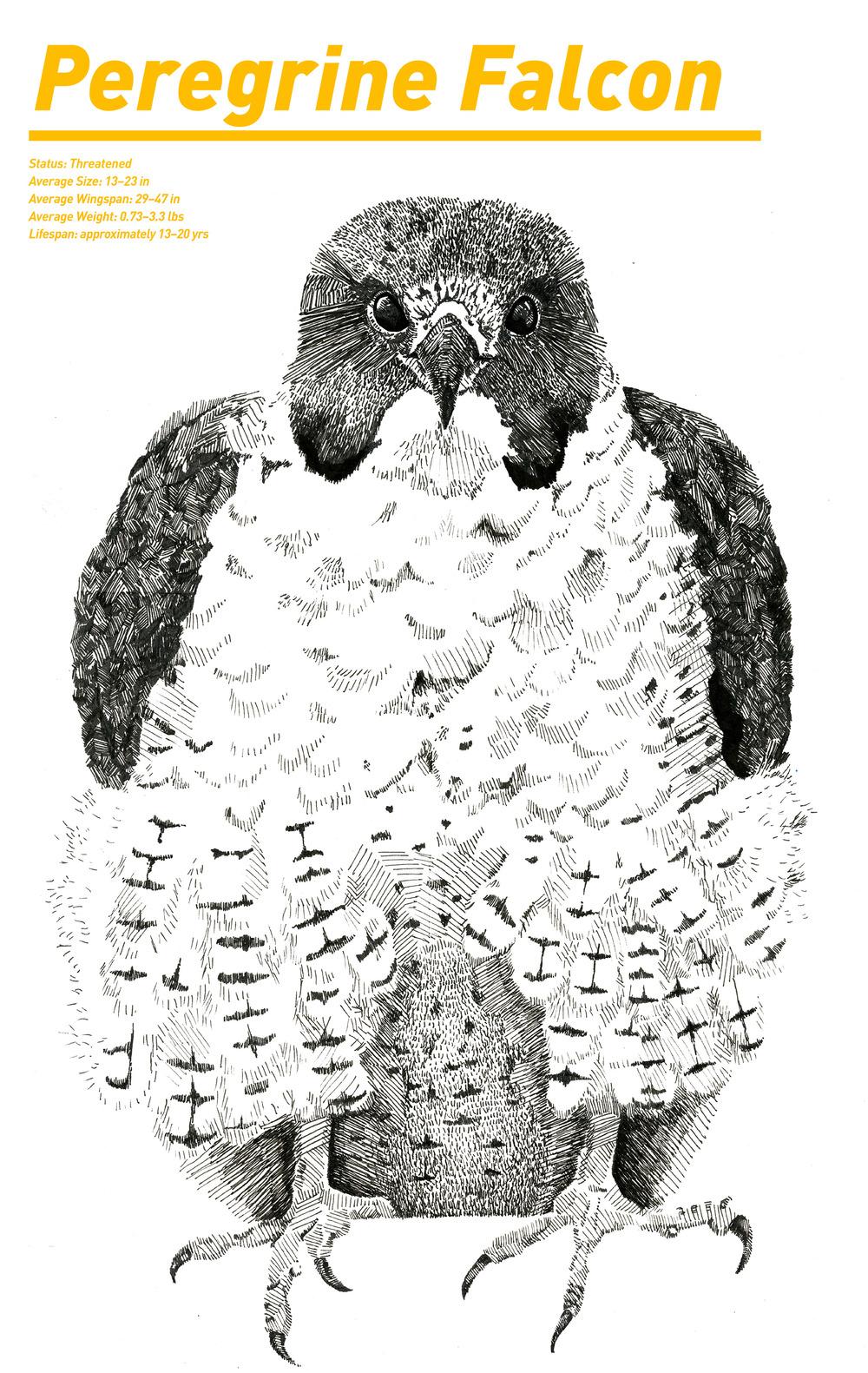 falcon_poster.jpg