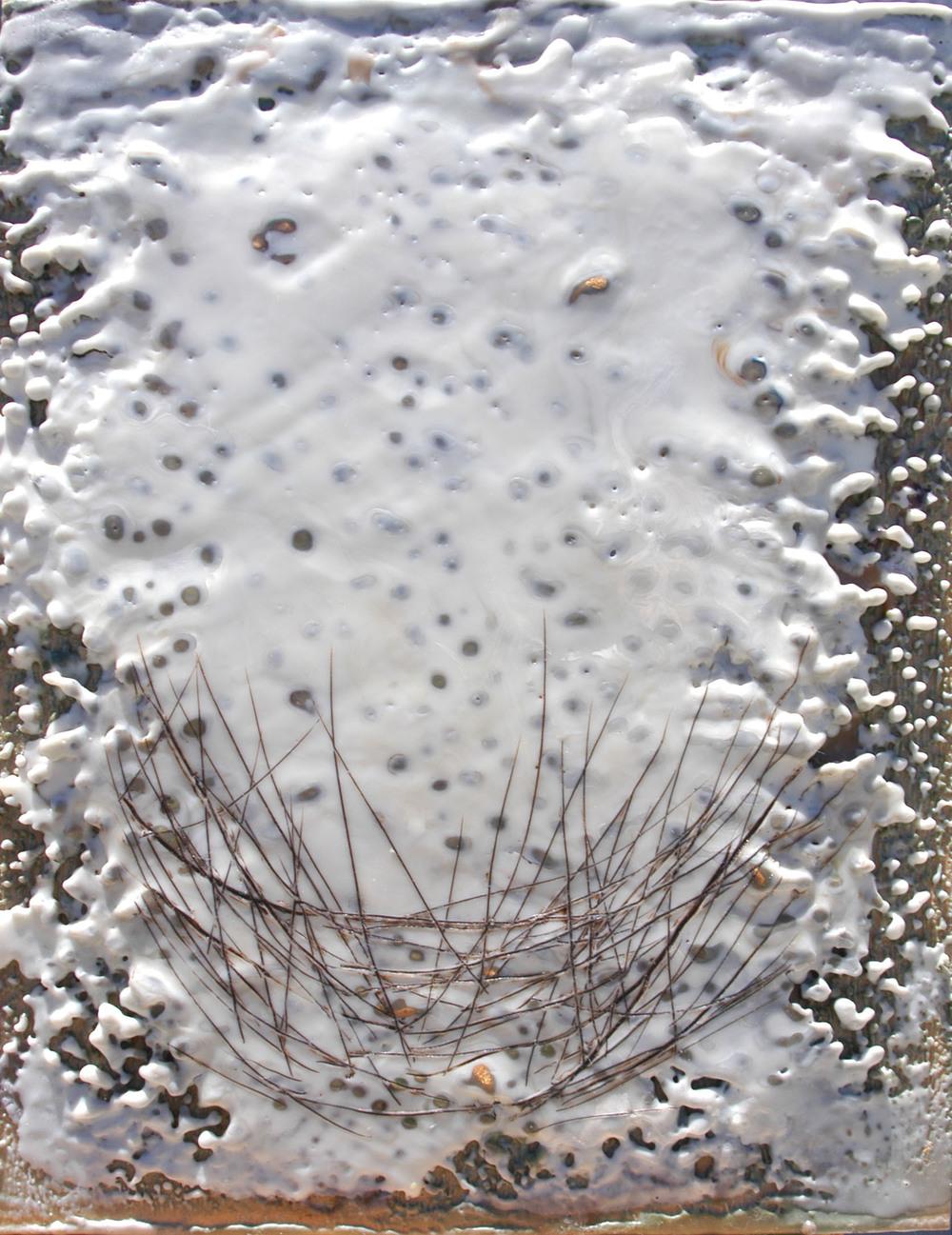 White Nest Study