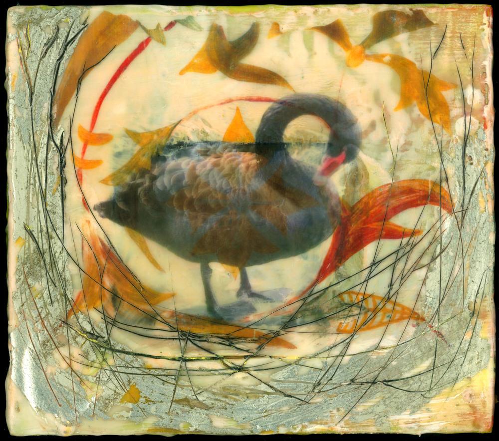 Pruning Swan Nest, V3.jpg