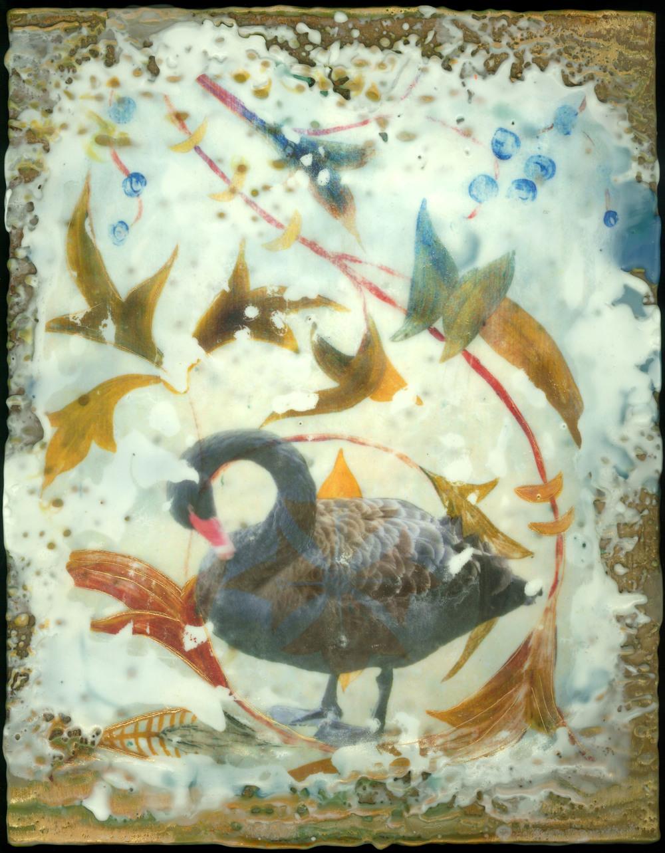 Pruning Swan