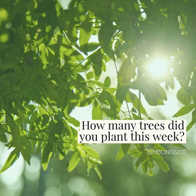 Want to plant trees while you search the web? Find out how at KINDLINGS.CO 🌳 (link in bio!)