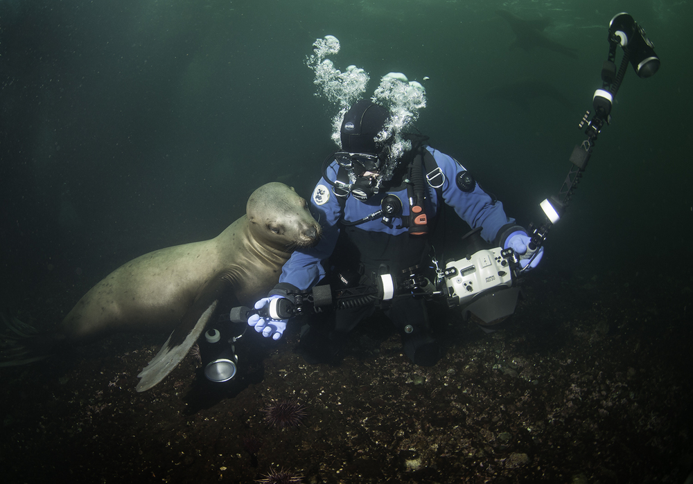 Steller Sea Lion and Mike, Eumetopias jubatus and Homo sapien