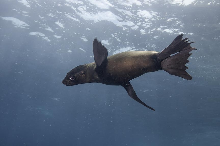 sea lion 5.jpg