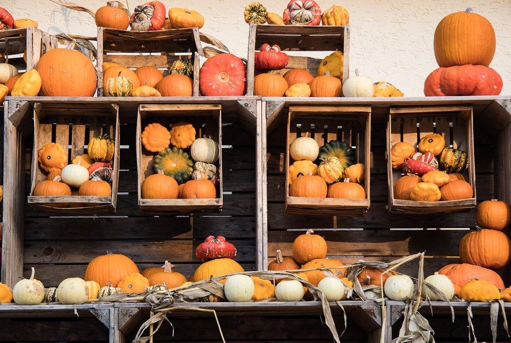 pumpkin-2894480_1920.jpg