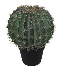 Goldenball cactus