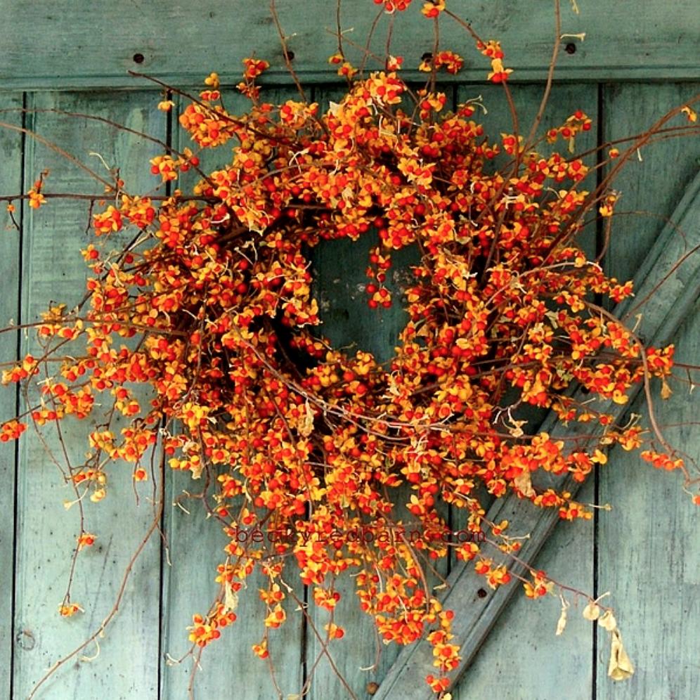 American-Bittersweet-Wreath.png