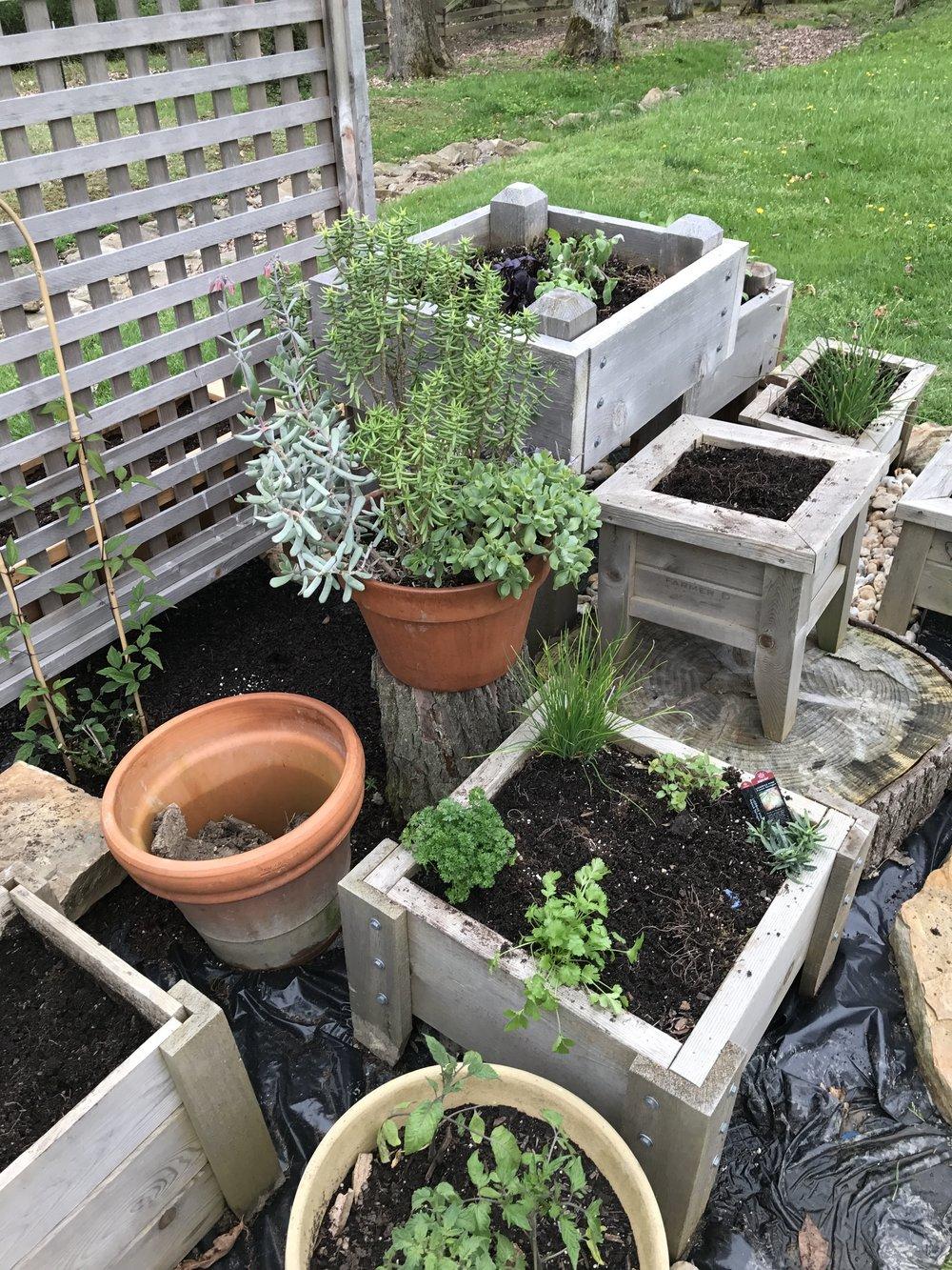 Lovely garden herbs!