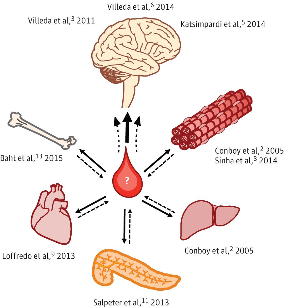 Young blood rejuvenates organs of broad diversity (from  Castellano et al , 2015, JAMA Neurology ).  Villeda et al, 2011 ,  Villeda et al 2014 ,  Katsimpardi et al 2014 ;  Conboy et al, 2005 ,  Sinha et al, 2014 ;  Conboy et al 2005 ;  Salpeter et al 2013 ;  Loffredo et al, 2013 ;  Baht et al, 2015 .