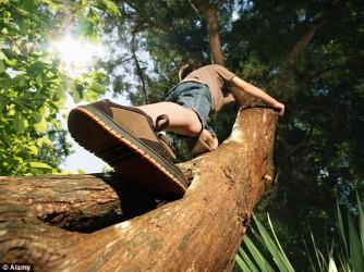tree-climb-e1424364500339.jpg