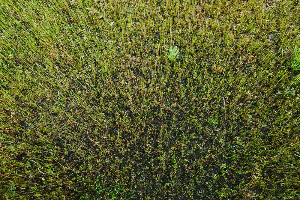 Impact Media Lab_Vernal Pools_nature photography-21.jpg