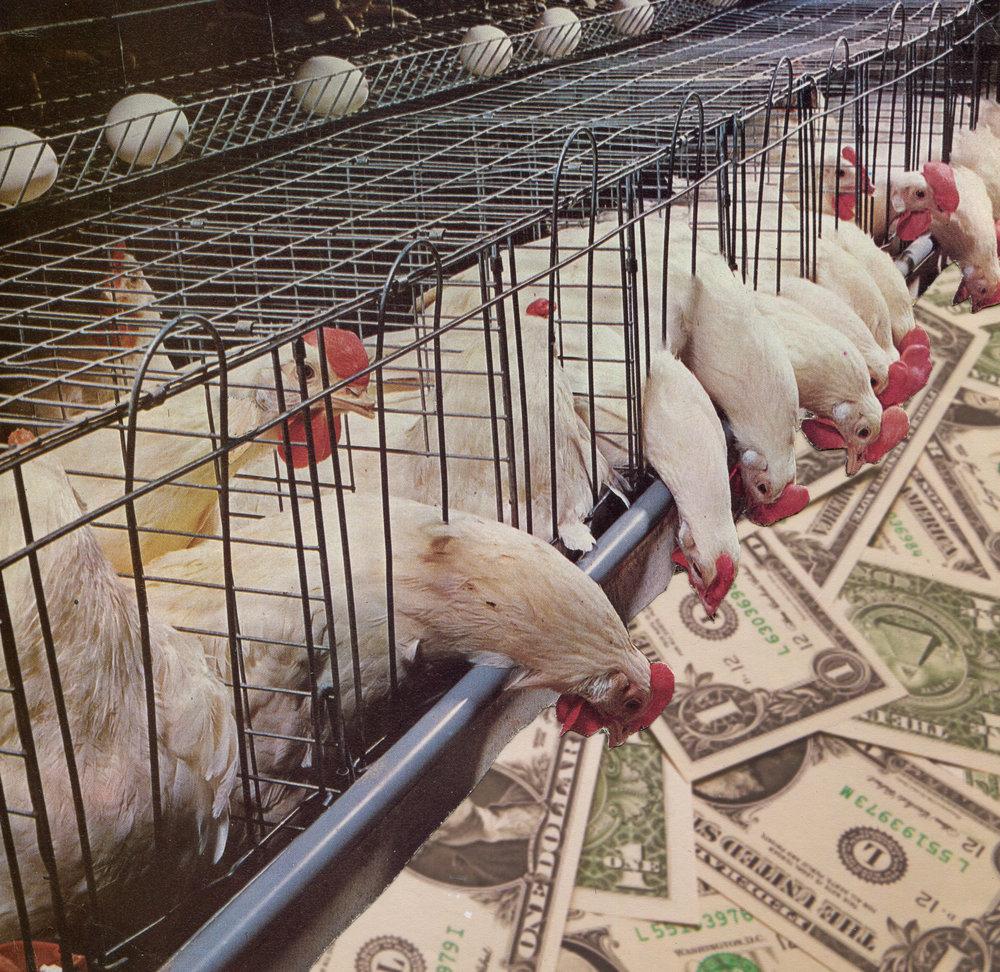 Poultry Profit