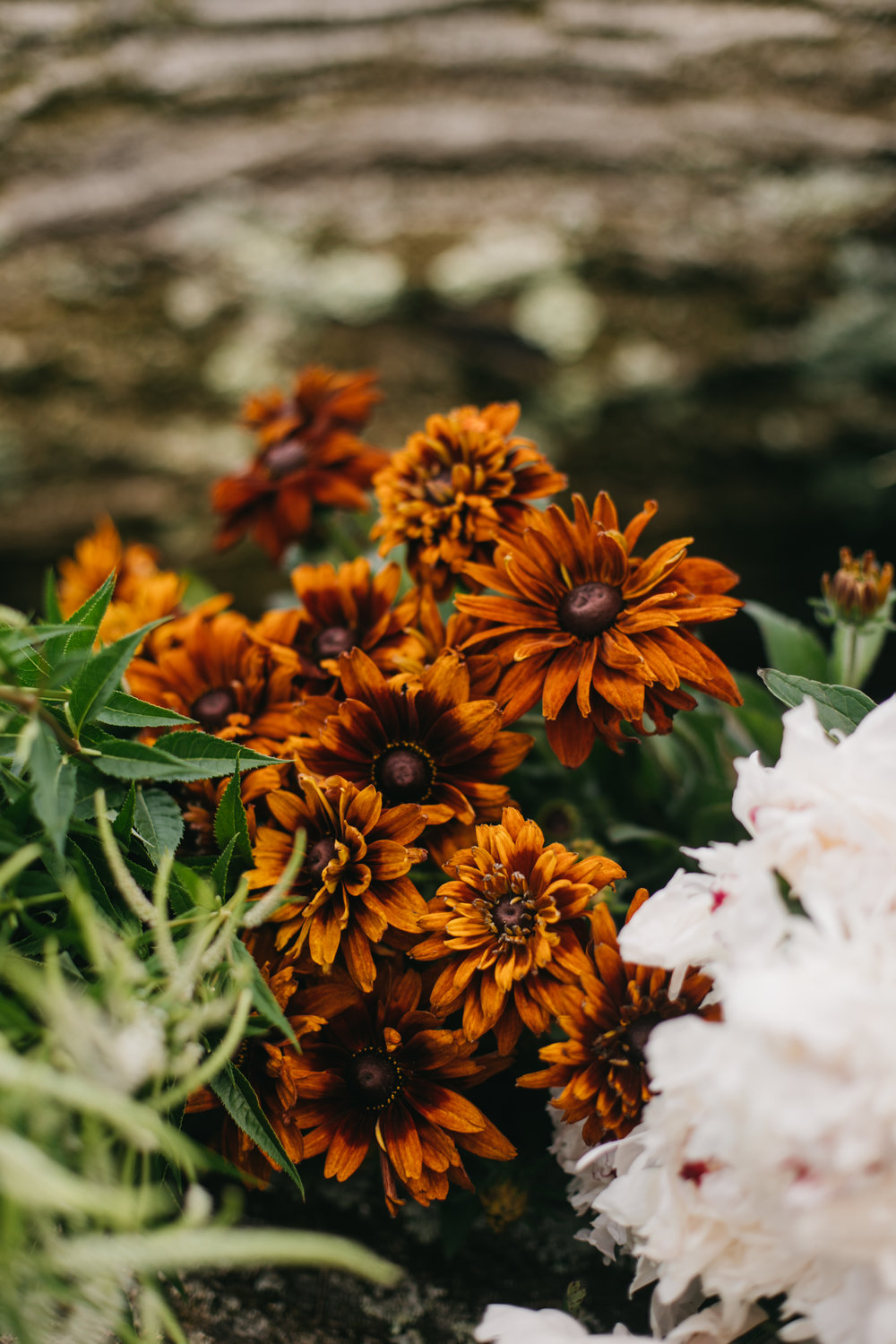 Darling and Daughters Florals, Baltimore, Washington DC, Events, Monthly, Flower Subscriptions, Small Events, Custom Flowers, Summer Butterbee Farm-14.jpg