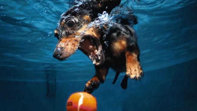 01_UnderwaterDogs_TWC_650x366.jpg