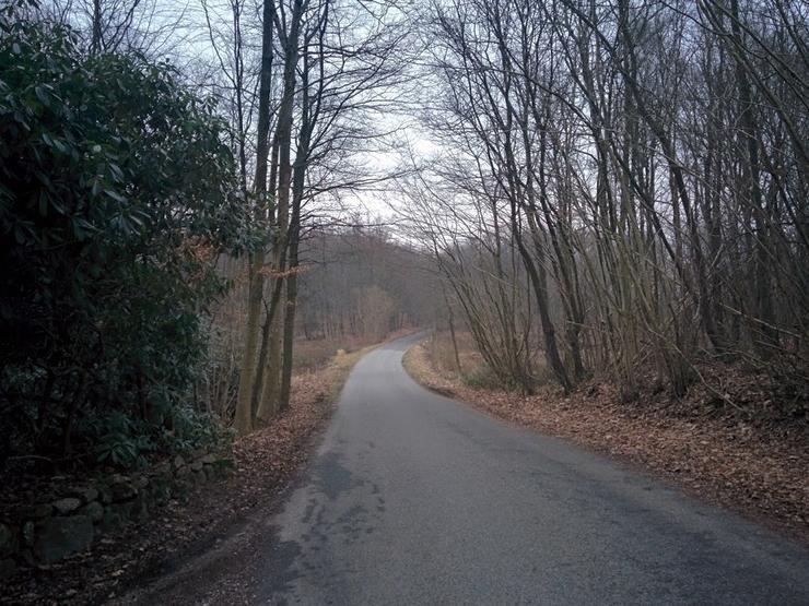 Nyrupvej, Grøfteskoven.jpg