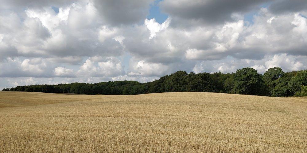 Paradisskoven2.jpg