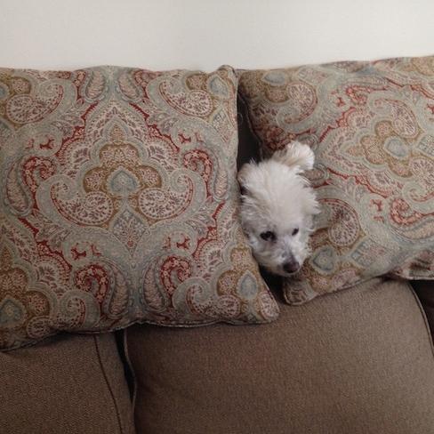 SMU's Pets-In-Residence , November 30, 2015