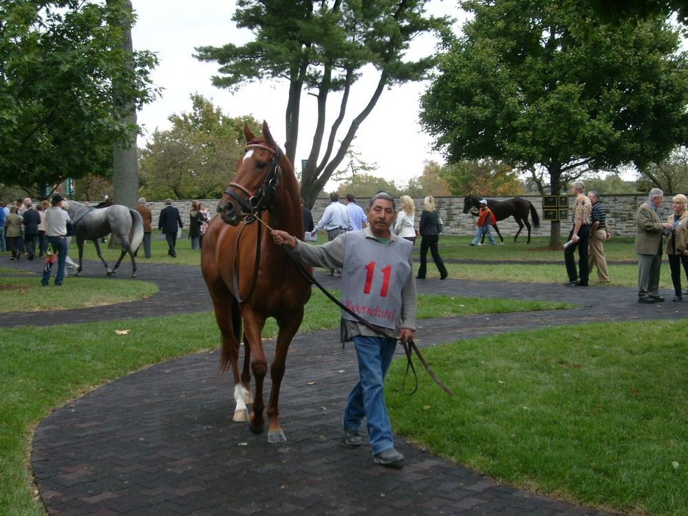 Horse_Farm_Pictures_108_lg.jpg