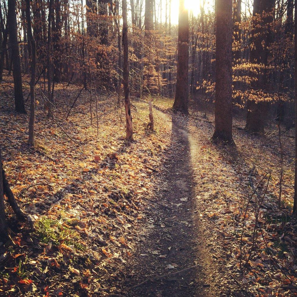 Rosaryville trail.JPG