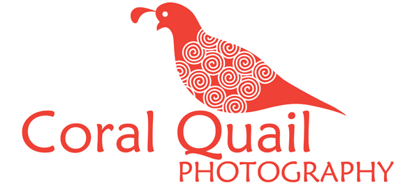 Coral Quail Photography