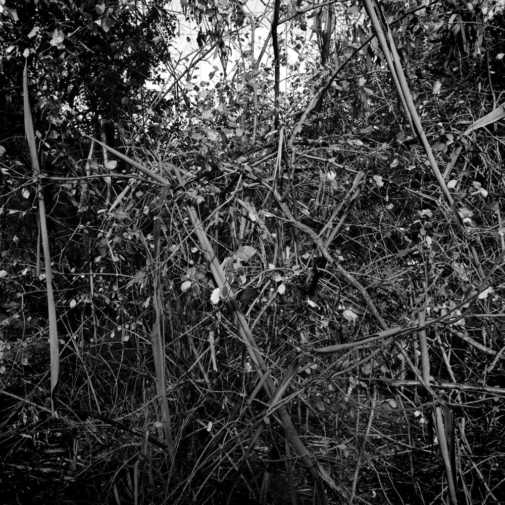 ChaosTrees.jpg