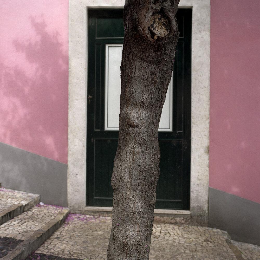 TreeWithPinkWall.jpg