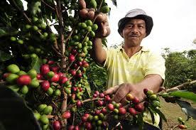 coffee farm 1.jpg